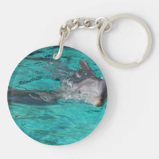 delfín que sale de la página llena del agua del