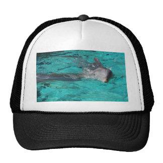 delfín que sale de la página llena del agua del tr gorro de camionero