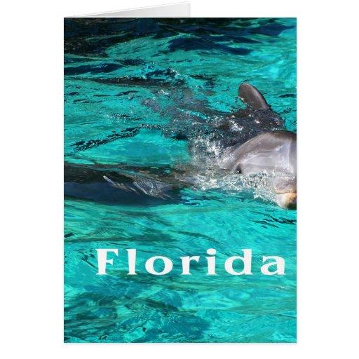 delfín que sale del agua clara florida.jpg del tarjeta de felicitación