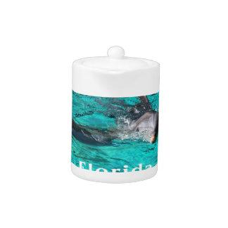 delfín que sale del agua clara florida jpg del tru