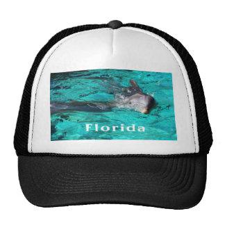 delfín que sale del agua clara florida.jpg del tru gorras