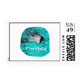 delfín que sale del agua clara la Florida del Sellos