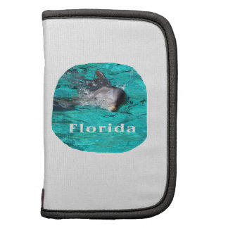 delfín que sale del agua clara la Florida del trul Planificadores
