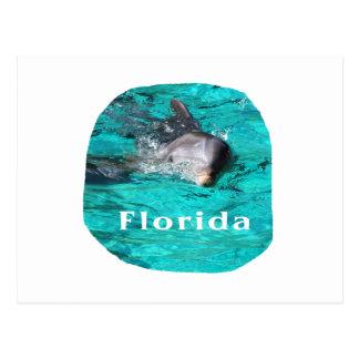delfín que sale del agua clara la Florida del trul Postales