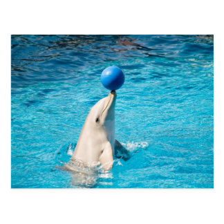 Delfín que tiene una bola postales