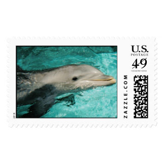 Delfín Sello Postal