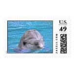 Delfín sonriente envio
