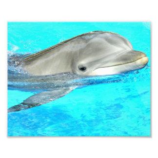 Delfín sonriente fotografía