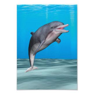 Delfín sonriente impresiones fotograficas