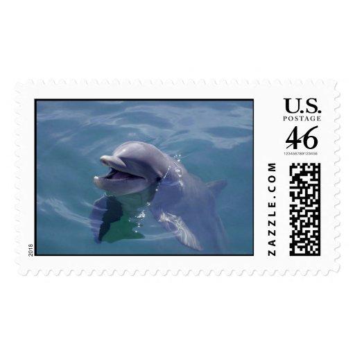 Delfín sonriente franqueo