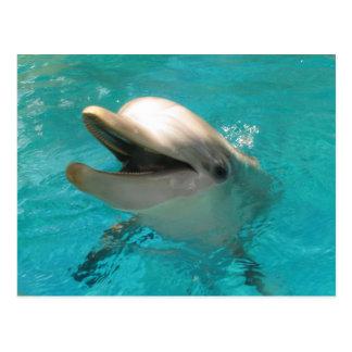 Delfín sonriente postal
