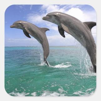 Delfin Stickers