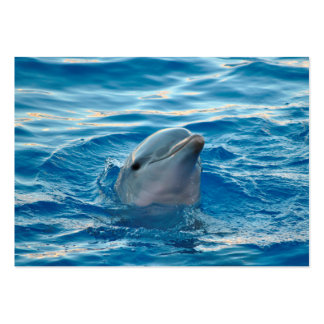 Delfín Tarjetas De Visita Grandes