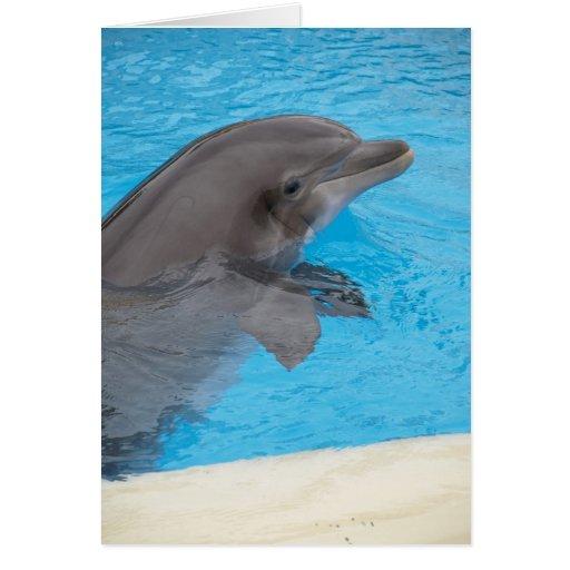 Delfín Tarjetón