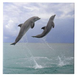 Delfin (un Tuemmler más grueso) Azulejo Cuadrado Grande