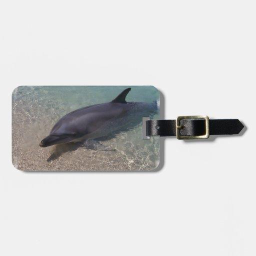 Delfín varado etiquetas maletas