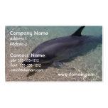 Delfín varado plantilla de tarjeta de visita