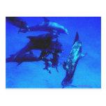 Delfínes azules (BiMiNi) Tarjetas Postales