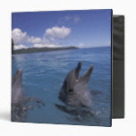 """Delfínes de Bottlenose de Micronesia, Palau Carpeta 1 1/2"""""""