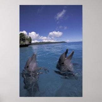 Delfínes de Bottlenose de Micronesia, Palau Poster