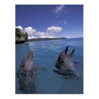 Delfínes de Bottlenose de Micronesia, Palau Postales