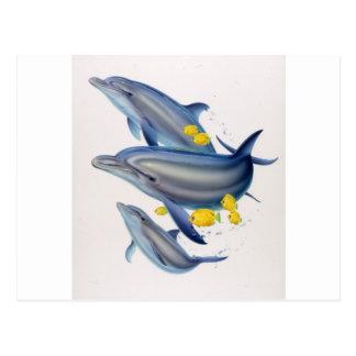 Delfínes de Bottlenose en concierto Tarjeta Postal