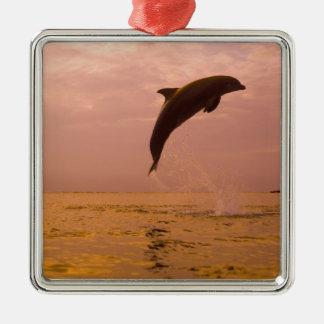 Delfínes de Bottlenose (truncatus del Tursiops) 2 Adorno Navideño Cuadrado De Metal