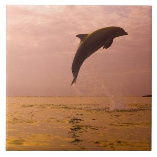 Delfínes de Bottlenose (truncatus del Tursiops) 2 Azulejo Cuadrado Grande