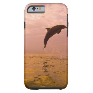 Delfínes de Bottlenose (truncatus del Tursiops) 2 Funda De iPhone 6 Tough
