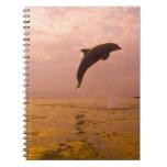 Delfínes de Bottlenose (truncatus del Tursiops) 2 Notebook