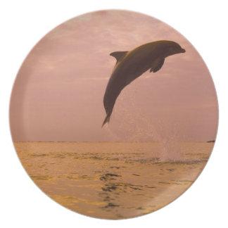 Delfínes de Bottlenose (truncatus del Tursiops) 2 Platos Para Fiestas