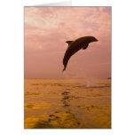Delfínes de Bottlenose (truncatus del Tursiops) 2 Tarjeta De Felicitación