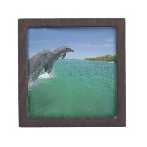 Delfínes de Bottlenose (truncatus del Tursiops) Caja De Recuerdo De Calidad