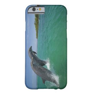 Delfínes de Bottlenose (truncatus del Tursiops) Funda De iPhone 6 Barely There