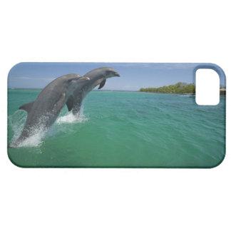 Delfínes de Bottlenose (truncatus del Tursiops) iPhone 5 Protectores