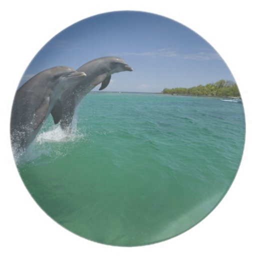 Delfínes de Bottlenose (truncatus del Tursiops) Plato Para Fiesta