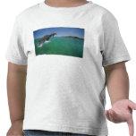 Delfínes de Bottlenose (truncatus del Tursiops) Camiseta
