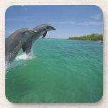 Delfínes de Bottlenose (truncatus del Tursiops) Posavasos
