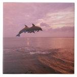 Delfínes de Bottlenosed que saltan en la puesta de Azulejos Ceramicos
