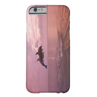 Delfínes de Bottlenosed que saltan en la puesta Funda Barely There iPhone 6