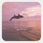 Delfínes de Bottlenosed que saltan en la puesta Calcomanía Cuadrada Personalizada