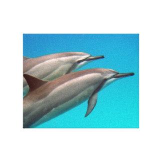 Delfínes de Hawaii Lienzo Envuelto Para Galerías