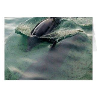 Delfínes de Hawaii Felicitación