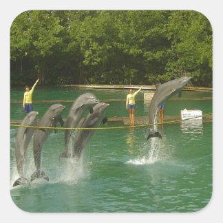 Delfínes del baile en Miami Pegatina Cuadrada
