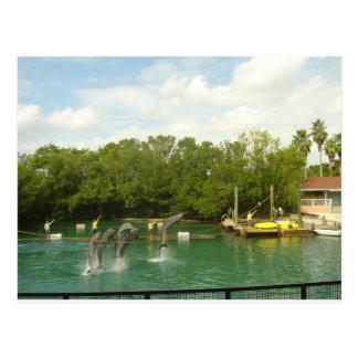 Delfínes del baile en Miami Tarjetas Postales