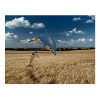 Delfínes del campo de maíz tarjetas postales