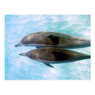 Delfínes del hilandero el | Oahu Hawaii Postal