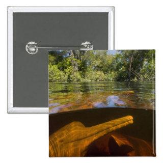 Delfínes del río Amazonas (geoffrensis) de Inia Ar Pin