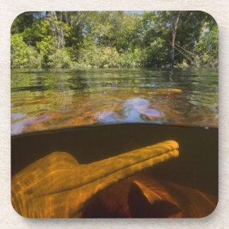 Delfínes del río Amazonas (geoffrensis) de Inia Ar Posavasos De Bebida
