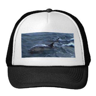 Delfínes en el boatside gorros